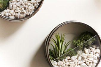 Jardines de cactus en recipientes de cristal, una tendencia original y cómoda complementos-decoracion-2 Blog Decoracion