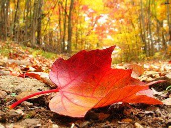 Detalles decorativos de otoño complementos-decoracion-2 Blog Decoracion