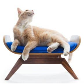 New Bent Plywood Cat Lounge
